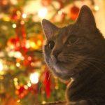 cat-677284_640